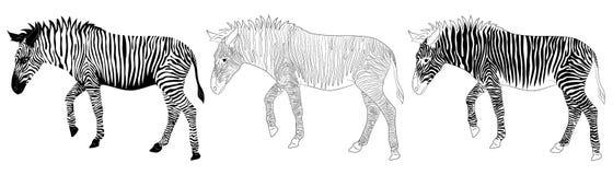 Силуэт и план зебры иллюстрация вектора