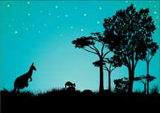 Силуэт кенгуру с голубым небом и звездами стоковое фото