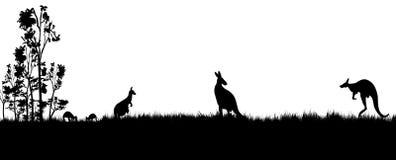 Силуэт коалы и деревьев кенгуру стоковое фото