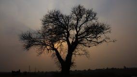 Силуэт комплекта солнца treeand стоковая фотография rf