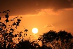 Силуэт листвы против ослеплять заходящего солнца на оранжевом облачном небе золота стоковая фотография