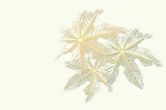 силуэт листьев Стоковая Фотография