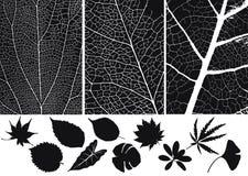 силуэт листьев Стоковое Изображение