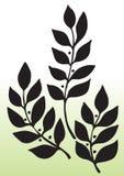 Силуэт листьев Стоковые Фотографии RF