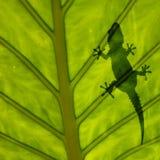 силуэт листьев gecko стоковая фотография rf