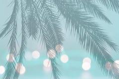 Силуэт лист ладони на праздничных расплывчатых светах на мягкой бирюзе teal стоковые изображения rf