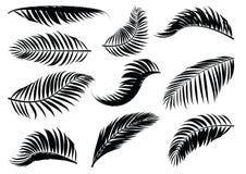 Силуэт лист ладони Стоковое фото RF