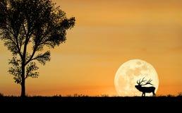 силуэт лося Стоковая Фотография RF