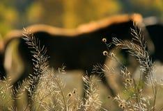 силуэт лошадей Стоковая Фотография