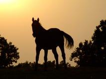 силуэт лошади Стоковые Изображения