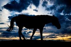 Силуэт лошади Стоковое фото RF