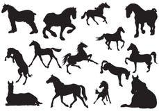 силуэт лошади Стоковое Изображение RF