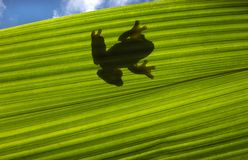 силуэт лягушки стоковая фотография rf