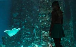 Силуэт молодой красивой девушки на предпосылке большого аквариума с хвостоколовыми и другими различными рыбами стоковая фотография