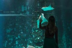 Силуэт молодой красивой девушки на предпосылке большого аквариума с хвостоколовыми и другими различными рыбами стоковые изображения rf
