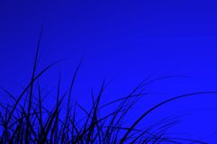 силуэт ночи травы Стоковые Изображения