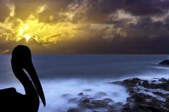Силуэт одичалого пеликана с драматическим восходом солнца над океаном - Лос Cocoteros, Лансароте Стоковое фото RF