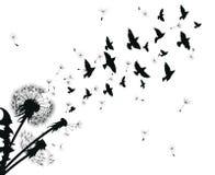 Силуэт одуванчика с семенами летания Черный контур одуванчика Черно-белая иллюстрация цветка Стоковые Фотографии RF