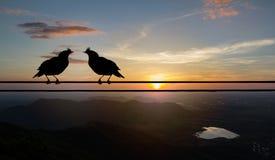 Силуэт пар птицы сидя на электричестве привязывает на запачканном заходе солнца за предпосылкой гор Стоковая Фотография
