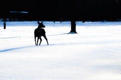 Силуэт прогулок оленей в снежном лесе стоковая фотография rf