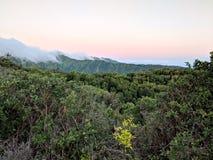 Силуэт прошлого захода солнца тропический деревьев Стоковое Изображение RF