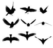 силуэт птицы Стоковые Изображения