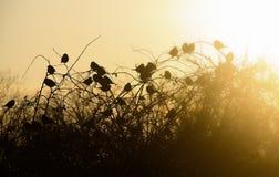 силуэт птиц Стоковые Фотографии RF