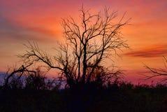 Силуэт рассвета Колорадо стоковая фотография rf