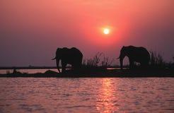 силуэт слона Стоковое Изображение RF