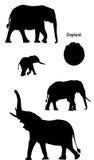 силуэт слонов стоковые фотографии rf
