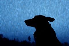 Силуэт собаки на улице Стоковая Фотография
