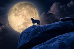 Силуэт стойки собаки против лунного света на утесе стоковые изображения