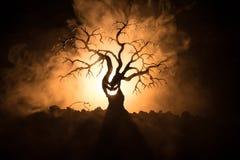 Силуэт страшного дерева хеллоуина с стороной ужаса на темной туманной тонизированной предпосылке с луной на задней стороне Страшн Стоковая Фотография