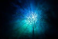 Силуэт страшного дерева хеллоуина с стороной ужаса на темной туманной тонизированной предпосылке с луной на задней стороне Страшн Стоковые Изображения