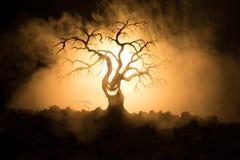 Силуэт страшного дерева хеллоуина с стороной ужаса на темной туманной тонизированной предпосылке с луной на задней стороне Страшн Стоковые Фото