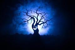 Силуэт страшного дерева хеллоуина с стороной ужаса на темной туманной тонизированной предпосылке с луной на задней стороне Страшн Стоковые Изображения RF