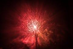 Силуэт страшного дерева хеллоуина с стороной ужаса на темной туманной тонизированной предпосылке с луной на задней стороне Страшн Стоковое фото RF