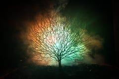 Силуэт страшного дерева хеллоуина с стороной ужаса на темной туманной тонизированной предпосылке с луной на задней стороне Страшн Стоковые Фотографии RF