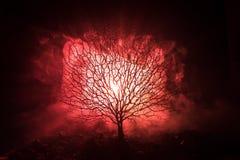 Силуэт страшного дерева хеллоуина с стороной ужаса на темной туманной тонизированной предпосылке с луной на задней стороне Страшн Стоковое Фото