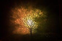 Силуэт страшного дерева хеллоуина с стороной ужаса на темной туманной тонизированной предпосылке с луной на задней стороне Страшн Стоковое Изображение RF