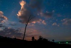Силуэт сухого дерева в ноче, с звёздным небом на backgro Стоковые Изображения RF