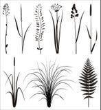 силуэт травы реальный Стоковое фото RF