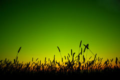 силуэт травы Стоковые Изображения RF