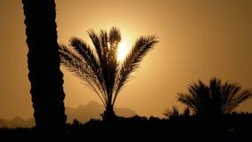 Силуэт тропической пальмы на заходе солнца в замедленном движении видеоматериал