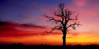 силуэт утра зарева Стоковая Фотография RF