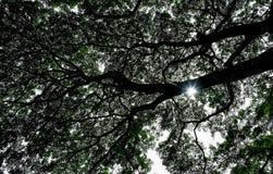 Силуэт хобота ветвей дерева против неба Стоковое фото RF