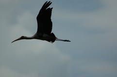 силуэт egret стоковое фото rf