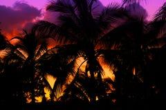 Силуэт Palmtrees на заходе солнца в тропике Стоковая Фотография RF