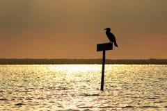 силуэт ria Португалии парка formosa птицы Стоковые Фотографии RF