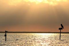 силуэт ria Португалии парка formosa птицы Стоковые Изображения